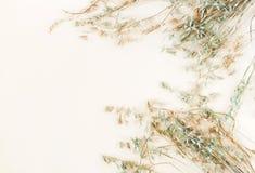Quelques épillets d'avoine sur le fond beige pâle photographie stock