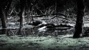 Quelques arbre et usines se tiennent sur le lac là ont un certain arbre cassé photo libre de droits