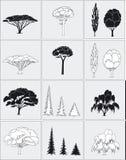 Quelques arbres Photographie stock libre de droits