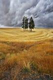 Quelques arbres dans les domaines Images libres de droits