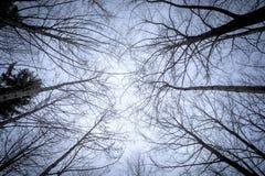 quelques arbres sans feuilles dans le ciel Images libres de droits