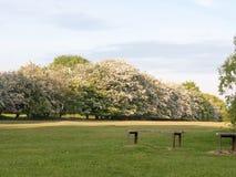 Quelques bancs de parc extérieurs pour se reposer et penser en nature et Photos stock