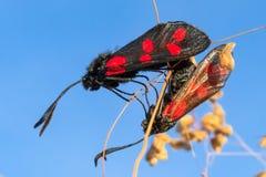 Quelques beaux papillons sont dans la chaleur Photographie stock libre de droits