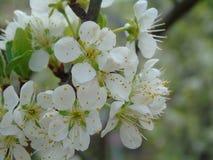Quelques belles fleurs du village photo stock