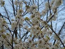 Quelques belles fleurs du village image libre de droits