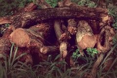 Quelques bois Photographie stock libre de droits