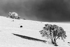 Quelques chiens au milieu de neige sur la montagne Ombrie, Italie de subasio, avec une petite usine couverte par la neige Photographie stock libre de droits