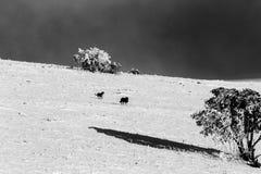 Quelques chiens au milieu de neige sur la montagne Ombrie, Italie de subasio, avec une petite usine couverte par la neige Photos stock