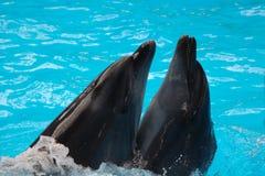 Quelques dauphins Photographie stock