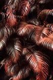 Quelques feuilles rouges de paume photo stock