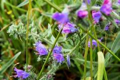 Quelques fleurs sauvages en Allemagne photo stock
