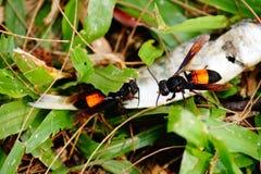 Quelques fourmis et un poisson photos libres de droits