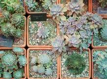 Quelques genres de cactus Image stock
