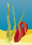 Quelques mauvaises herbes de mer dans l'eau photo libre de droits
