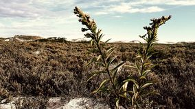 Quelques mauvaises herbes et le marais Images libres de droits