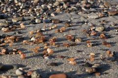 Quelques morceaux d'ambre ont trouvé sur le bord de la mer baltique Image libre de droits