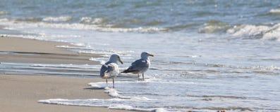 Quelques mouettes restant sur la plage Photo libre de droits