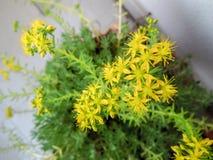 Quelques petites fleurs jaunes avec le fond vert et blanc pris d'en haut images stock