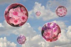 Quelques sphères de fleur Image stock