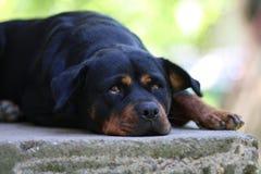 Quem perturba meu descanso? Foto de Stock
