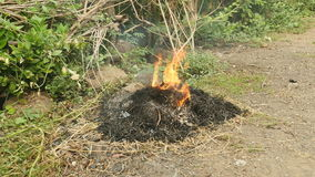 Quema de los restos de jardinería, desperdicios ardientes, hierba de la quemadura almacen de video