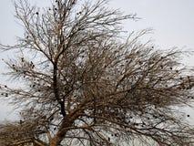 Quemado abajo de árbol después de fuego salvaje Fotografía de archivo libre de regalías
