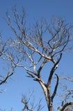 Quemado abajo de árboles en el bosque Imagen de archivo libre de regalías