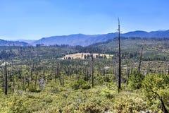 Quemado abajo de bosque en el parque nacional de Yosemite Imagenes de archivo