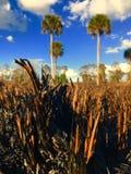 Quemadura controlada en la Florida Imágenes de archivo libres de regalías