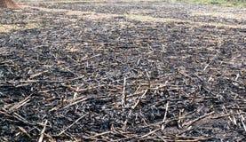 Quemadura del campo de maíz Imagenes de archivo