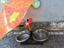Bowls of water to quench the dogs in the street stock photos
