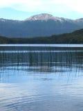 Queni van het meer in Patagonië Royalty-vrije Stock Fotografie