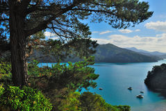 Quenne Charlotte Sound. Beautiful sunny day in Quenne Charlotte Sound in New Zealand royalty free stock image