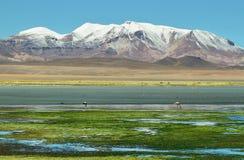 Quepiaco盐水湖,智利 免版税库存图片