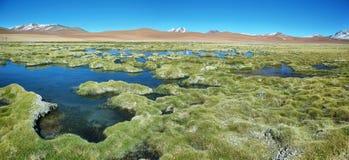 Quepiaco laguna, Chile zdjęcie royalty free