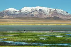 Quepiaco-Lagune, Chile lizenzfreie stockbilder