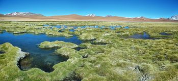 Quepiaco-Lagune, Chile lizenzfreies stockfoto