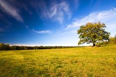 Quercia (autunno) Fotografie Stock Libere da Diritti