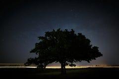 Quercia con le foglie verdi su un fondo del cielo notturno Immagine Stock