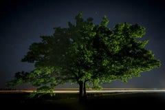 Quercia con le foglie verdi su un fondo del cielo notturno Fotografia Stock Libera da Diritti