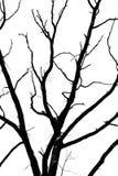 Quercia dell'albero asciutta Immagini Stock Libere da Diritti