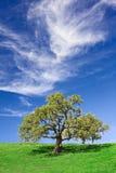 Quercia e Cloudscape Immagine Stock Libera da Diritti