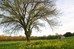 Quercia e Trullo. An oak tree and a trullo in the countryside near Laureto, Italy stock images