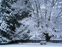 Quercia nella neve Fotografia Stock Libera da Diritti