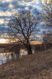 Quercia sulla banca del fiume Fotografia Stock Libera da Diritti