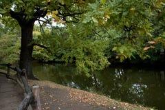Quercia in un parco di autunno Fotografia Stock