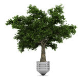 Quercus tree. A Quercus tree growing out of a lightbulb Royalty Free Stock Photography