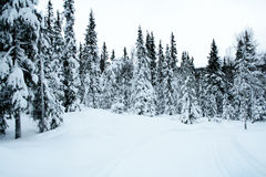 Querland-Skifahrenspur 5 Stockbilder