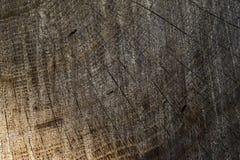 Querschnitt des Baums 1 Stockfotos