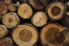 Querschnitt des Baums Lizenzfreie Stockfotos